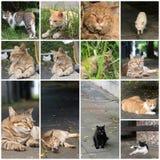 Stray tabby cat Royalty Free Stock Photography