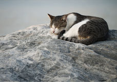 Stray tabby cat sleeping on rock Royalty Free Stock Image