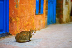 Stray tabby cat on a street of Essaouira Stock Photography