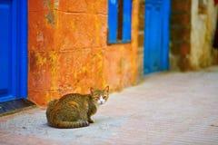 Stray tabby cat on a street of Essaouira. Adorable tabby cat on a street in Medina of Essaouira, Morocco Stock Photography