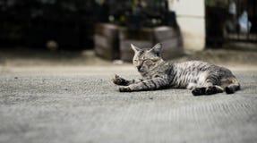 A stray tabby cute cat. Tabby cat lying down and sleeping on the floor, selective focus stock photos