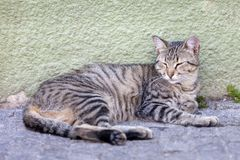Stray tabby kitten in the street. Stray tabby cat relaxing in summer in the street in Porto, Portugal Royalty Free Stock Image
