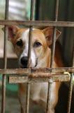 Stray triste al riparo animale Fotografia Stock
