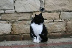 Tuxedo cat on a footpath. A stray tuxedo cat sitting on a footpath in front of a stone wall on the Limassol seafront on a rainy winter day royalty free stock photos