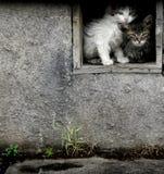 Stray Wet Kittens Stock Photos