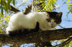 Stray cat run-away waiting on a tree branch Royalty Free Stock Images