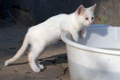 Stray white kitten Stock Photos