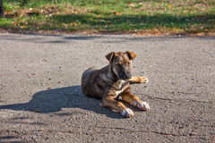 Stray young dog Stock Image