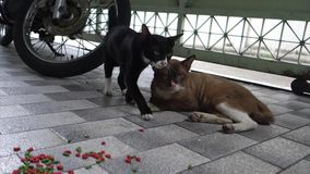 Stray Young Mother Black Cat and Big Father Brown Cat Sit and Sleep on the Floor. Lover Cat Cuddle together.  stock video