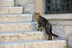 Straying cat on the staircase Royalty Free Stock Image