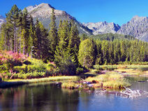 Strbske Pleso in High Tatras at summer Royalty Free Stock Image