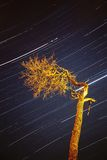 Streaking stars in night sky. Streaks of stars and objects in the sky during a long, two-hour night exposure next to a tree Royalty Free Stock Photo