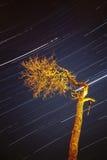 Streaking stars in night sky Royalty Free Stock Photo