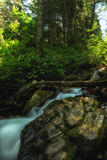 Streaks of Moss. Mountain river / waterfall in the summer in the Wasatch national forest in Utah USA with slow exposure Royalty Free Stock Image