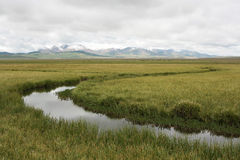 Stream. On a plateau in mountains of Kyrgyzstan, asia Royalty Free Stock Images