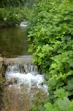 Stream. Green plant under a clear stream was taken in the summer of Royalty Free Stock Image