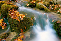 Stream. Among green stones with autumn leafage Royalty Free Stock Photos