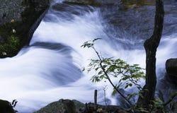 Stream. A stream in a autumn forest Stock Photos