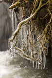 Stream. In winter with ice and icicles Royalty Free Stock Photos