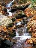 Stream. Autumn stream royalty free stock photography