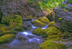 Stream. Green moss and little stream Stock Photography