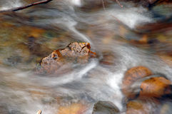 Stream. Water stream over colored rocks and stones Royalty Free Stock Photos
