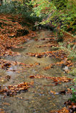Stream. Looking down stream in autumn woods Royalty Free Stock Images