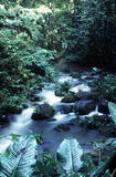 Stream. Rainforest stream stock image