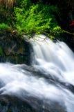 Stream. The beautiful stream in mountain royalty free stock photos