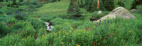 Stream and Alpine Flowers, Royalty Free Stock Photo