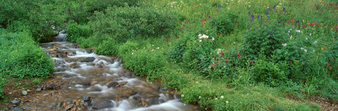 Stream and Alpine Flowers Stock Images