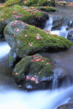 The stream of autumn. Mountain stream of autumn in Japan Royalty Free Stock Image