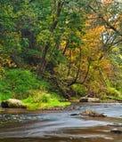 Stream in autumn Royalty Free Stock Photos