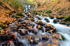 Stream in autumn. Scenic view of picturesque stream covered in autumnal leaves Royalty Free Stock Images
