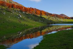 Stream in autumn. Abruzzo national park italy Stock Photo