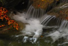 Stream in autumn. Abruzzo national park italy Stock Image
