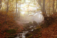 Stream in autumn beech forest Royalty Free Stock Photography