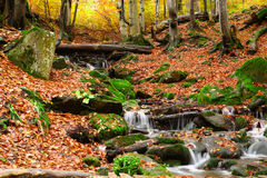 Stream in autumn beech forest Stock Images