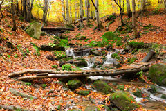Stream in autumn beech forest Royalty Free Stock Photo