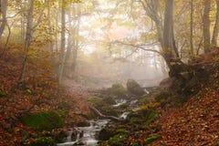 Stream in autumn beech forest Stock Photo