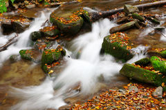 Stream in autumn beech forest Stock Photo