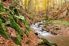 Stream in autumn beech forest Stock Photos
