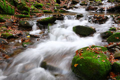Stream in autumn beech forest Royalty Free Stock Image