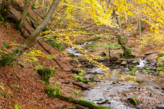 Stream in autumn beech forest Royalty Free Stock Images