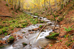 Stream in autumn beech forest Royalty Free Stock Photos