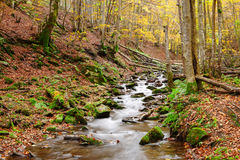 Stream in autumn beech forest Stock Image