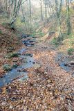 Stream in Autumn forest Stock Photography
