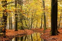 Stream in autumn forest Stock Photos