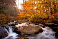Stream in autumn forest. Stream flowing through autumn forest in Smoky Mountains, North Carolina, U.S.A Royalty Free Stock Images