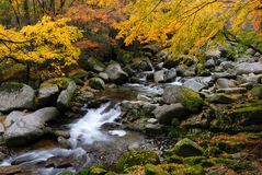 Stream in Autumn forest. Stream cascading over rocks and boulders in a pretty, colorful Autumn forest Royalty Free Stock Photos